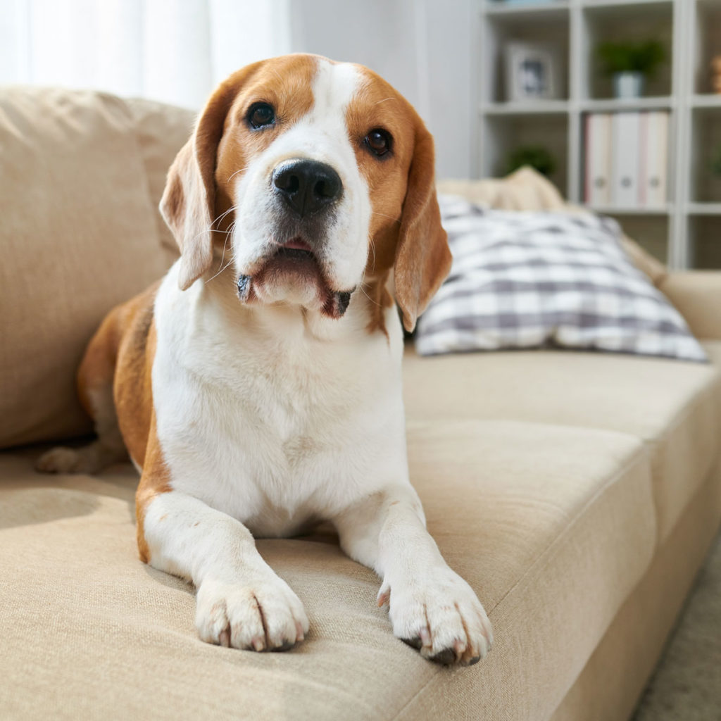 Choosing the Perfect Home for You and Your Dog